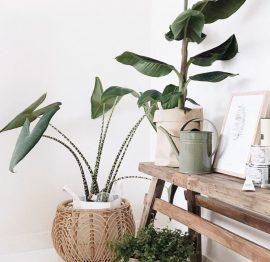 PLANTS! My passion!!
